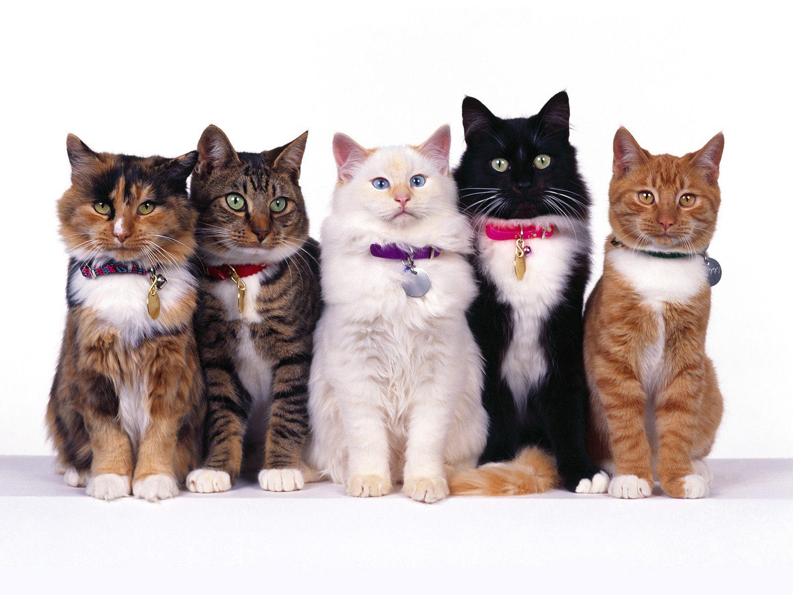 все выставки кошек: