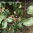 Обзор видео-роликов с YouTube: «Автопутешествие» и «Лесная речка»