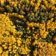 Крупный производитель фанеры зайдет в пермские леса