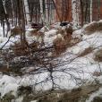 Стоп-кадром по Чайковскому – выпуск 6